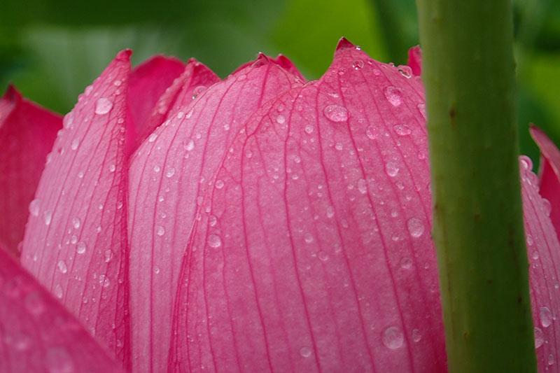 富加見正樹 雨の足あと