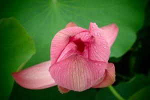 富加見正樹 花脈・水と栄養が通る道