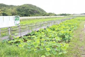 6月8日現在 大島田