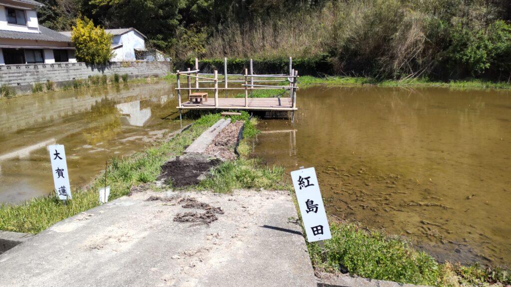中島田古代蓮ほ場