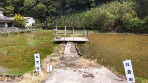 古代蓮と紅島田