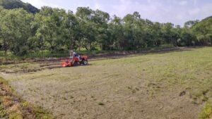 ヒマワリを植える田んぼ