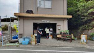 中島田の古代蓮
