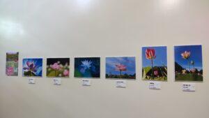 写真コンテスト優秀賞作品の展示