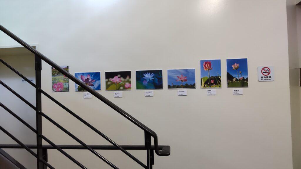 写真コンテスト優秀作品の展示